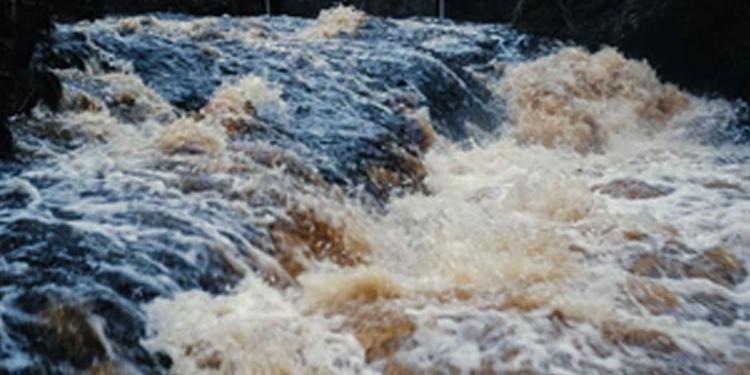 silkon tropis